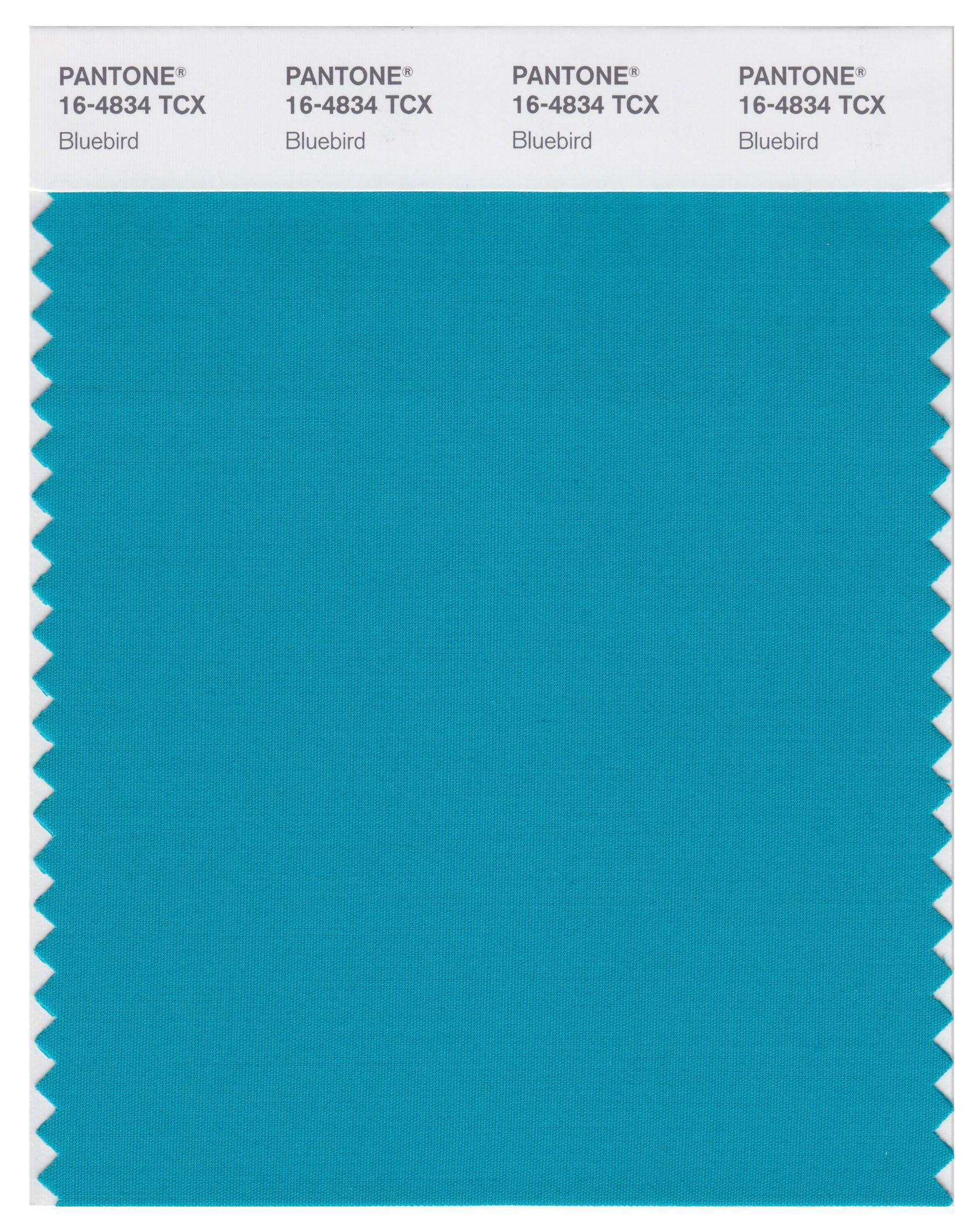 International Magazine Store Nyc Pantone Smart 16 4834 Tcx Color Swatch Card